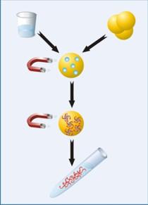 Prinzip des GXT DNA/RNA Extraction Kit