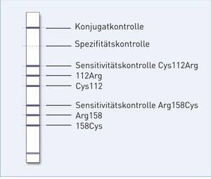 Streifengrafik GenoType ApoE