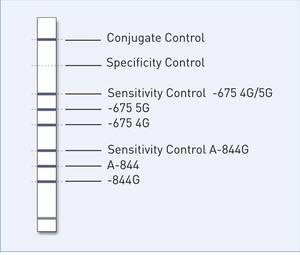 reaction zones GenoType PAI-1