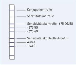 Streifengrafik GenoType PAI-1