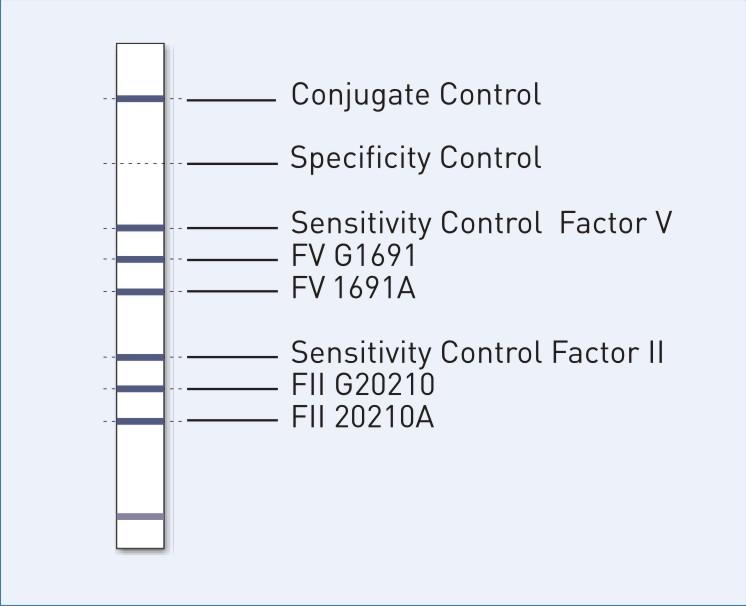 icd 9 code mthfr gene mutation