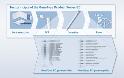 Test principle of the GenoType Product Series BC