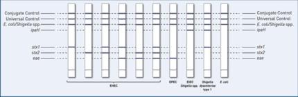 reaction zones  GenoType EHEC