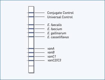reaction zones GenoType Enterococcus