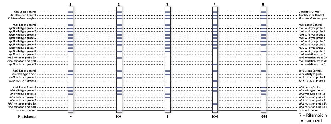 fosamax 5 mg posologie