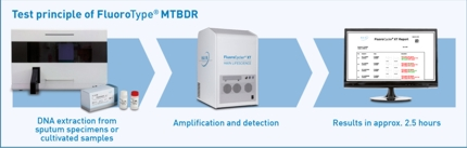 Test principle of FluoroType® MTBDR