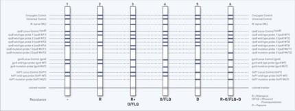 reaction zones GenoType LepraeDR