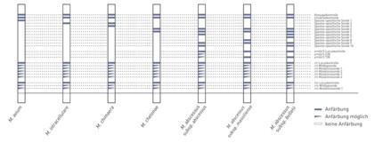 Streifengrafik GenoType NTM-DR