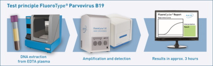 Test principle of FluoroType® Parvovirus B19