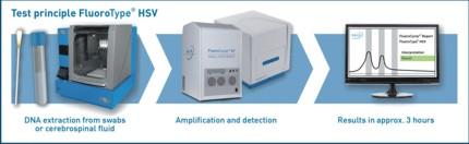 Testprinzip FluoroType® HSV