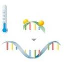 PCR mit Hybridisierungssonden Schritt 1