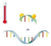 PCR mit Hybridisierungssonden Schritt 3