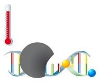 PCR mit Hydrolysesonden Schritt 2